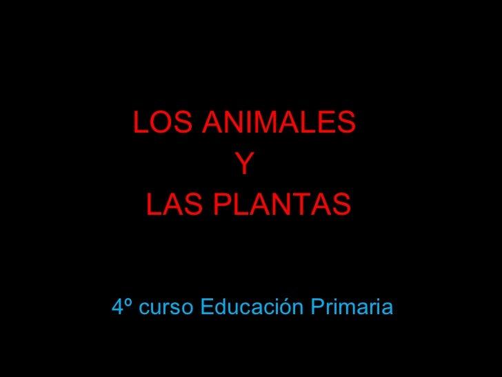 LOS ANIMALES  Y  LAS PLANTAS 4º curso Educación Primaria