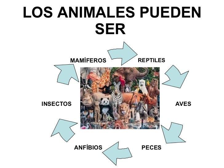 LOS ANIMALES PUEDEN SER   REPTILES INSECTOS MAMÍFEROS ANFÍBIOS PECES AVES