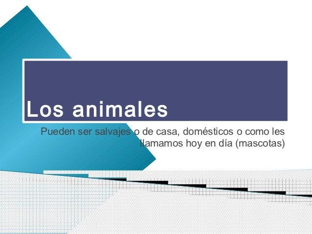 Los animales Pueden ser salvajes o de casa, domésticos o como les                      llamamos hoy en día (mascotas)