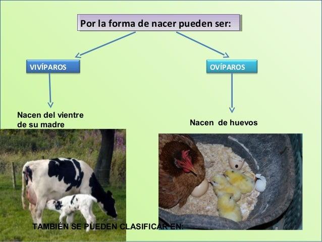 Conociendo Animales Mayo 2014
