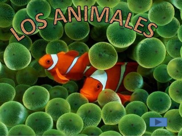CARNÍVOROS     Se alimentan de otros animalesSEGÚN SU                     Se alimentan de plantas               HERVÍBOROS...