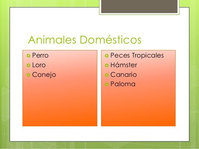 Los animales  ITED Slide 2