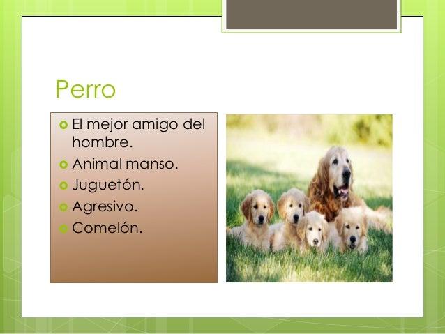 Los animales  ITED Slide 3