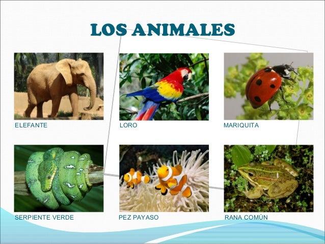 LOS ANIMALESELEFANTE LORO MARIQUITASERPIENTE VERDE PEZ PAYASO RANA COMÚN