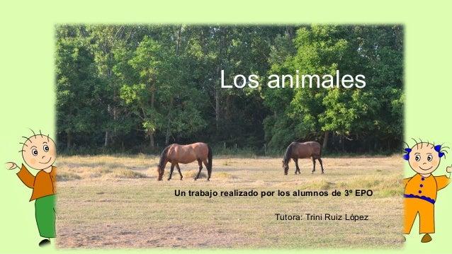 Los animales  Un trabajo realizado por los alumnos de 3º EPO Tutora: Trini Ruiz López