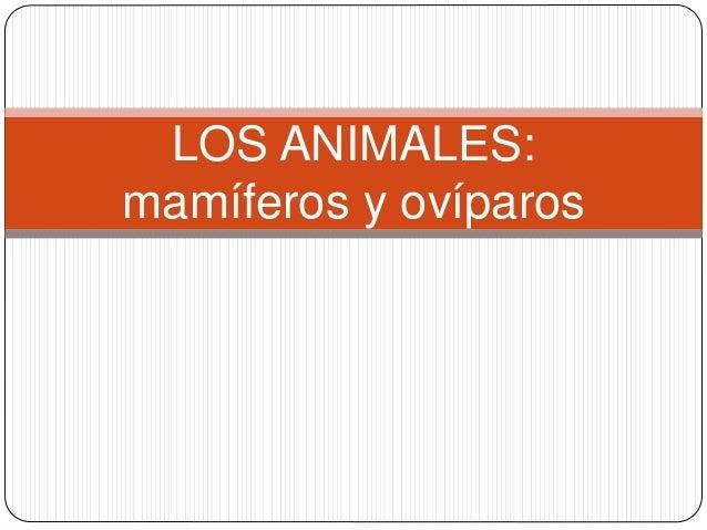 LOS ANIMALES: mamíferos y ovíparos