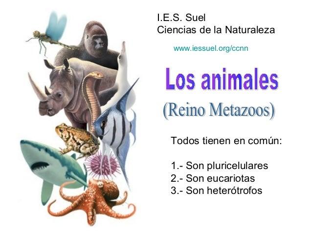 I.E.S. Suel Ciencias de la Naturaleza Todos tienen en común: 1.- Son pluricelulares 2.- Son eucariotas 3.- Son heterótrofo...