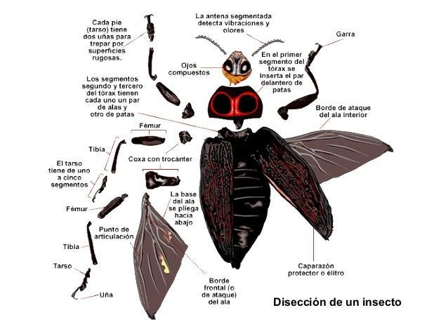 MetamorfosisMetamorfosis