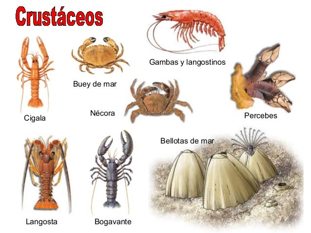 Musaraña