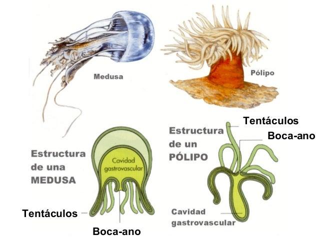 Lapa Turritella Liebre de mar BígaroCoña Cañaílla