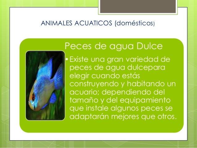 Peces de agua Dulce •Existe una gran variedad de peces de agua dulcepara elegir cuando estás construyendo y habitando un a...