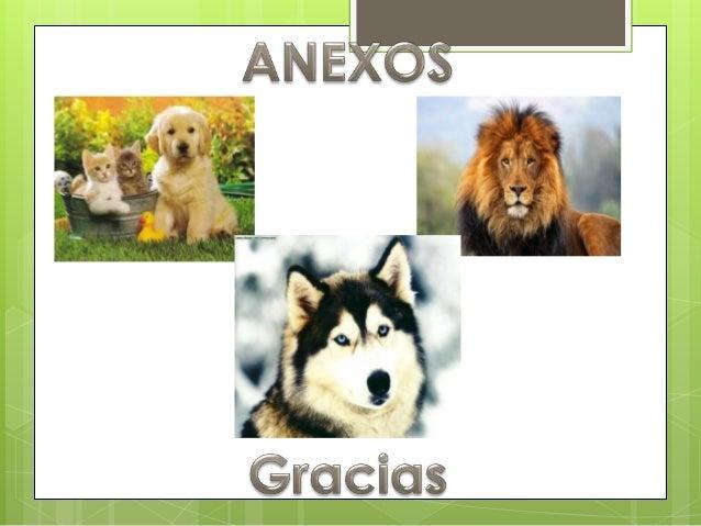 Los animales11