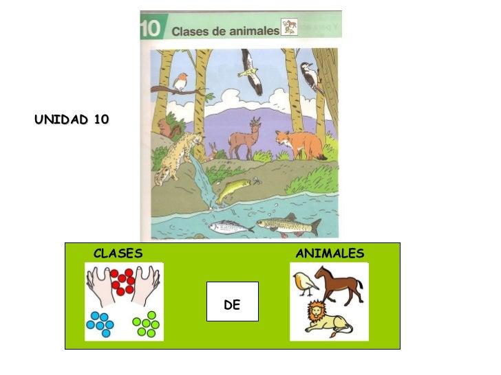 CLASES  DE ANIMALES UNIDAD 10