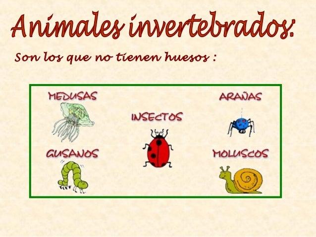 Resultado de imagen de invertebrados 2º primaria
