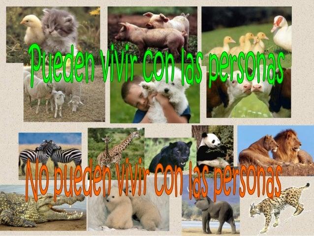 AnimalesDomésticos                  Salvajes(los cuidan las personas   (los que viven en lay obtienen beneficios)         ...