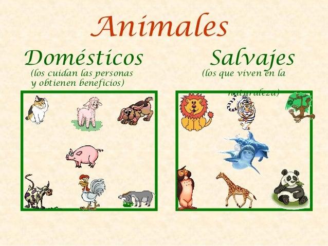 CARNÍVOROS:   se alimentan de carne.HERBÍVOROS:   se alimentan de plantas.OMNÍVOROS:    se alimentan de todo (carne yplant...