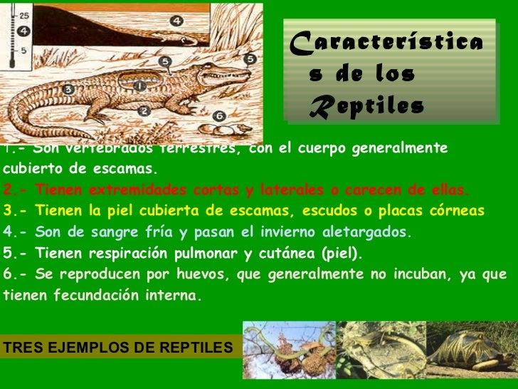 Los animales clasificaci n seg n su estructura primaria for Caracol de jardin de que se alimenta