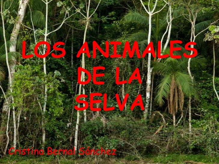 LOS ANIMALES      DE LA      SELVACristina Bernal Sánchez
