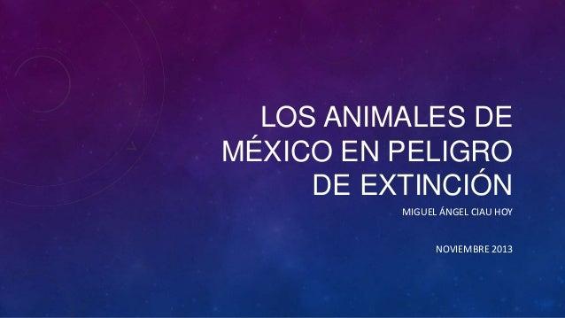 LOS ANIMALES DE MÉXICO EN PELIGRO DE EXTINCIÓN MIGUEL ÁNGEL CIAU HOY  NOVIEMBRE 2013