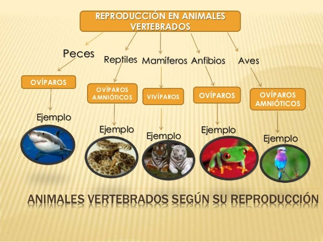 El reino animal for La reproduccion de los peces