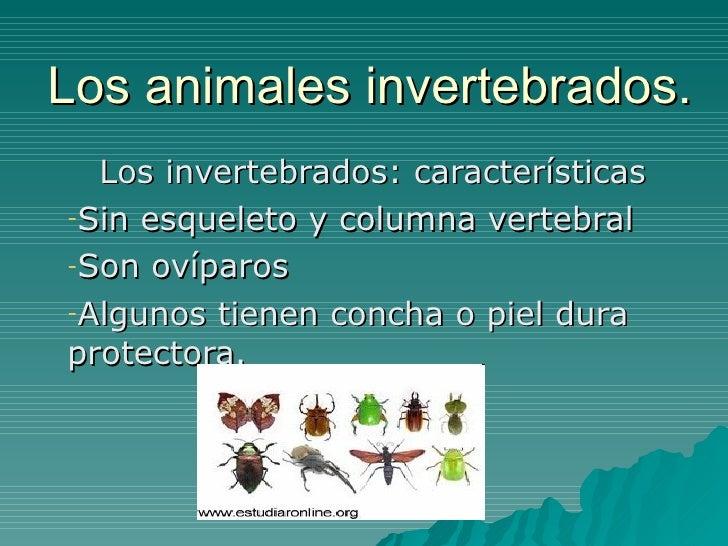 Los animales invertebrados. <ul><li>Los invertebrados: características </li></ul><ul><li>Sin esqueleto y columna vertebral...