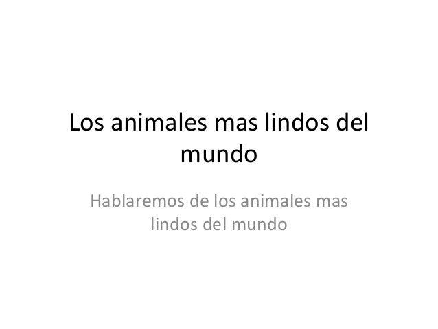 Los animales mas lindos del mundo Hablaremos de los animales mas lindos del mundo