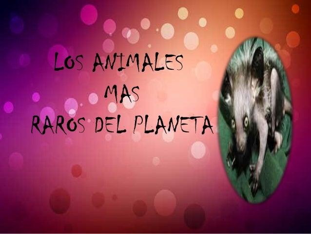 LOS ANIMALES MAS RAROS DEL PLANETA