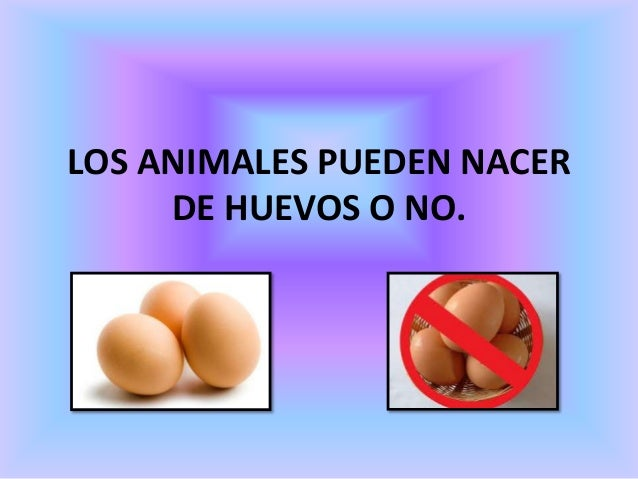 LOS ANIMALES PUEDEN NACER DE HUEVOS O NO.