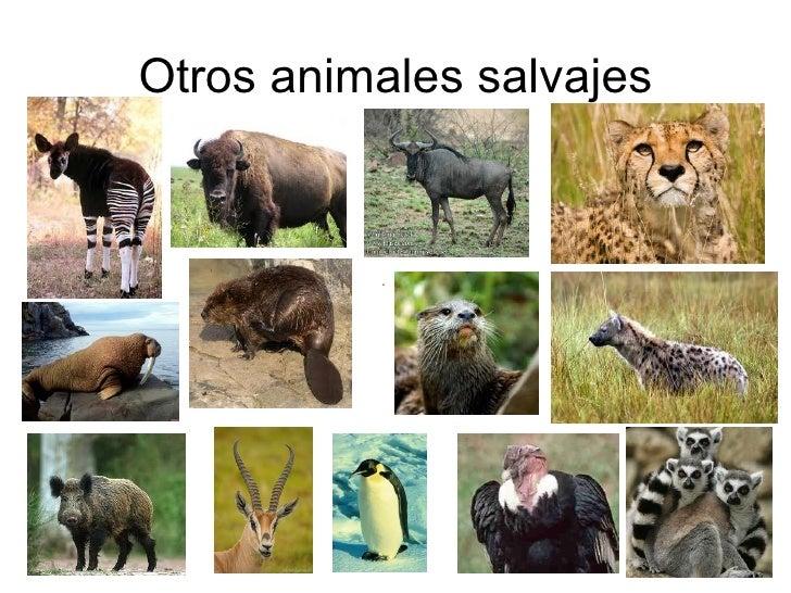 Lista de animales salvajes yahoo dating 4