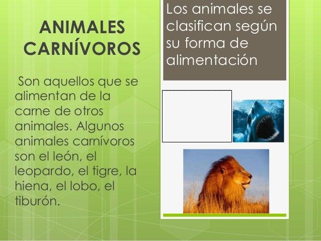 Los animales se  ANIMALES               clasifican según CARNÍVOROS              su forma de                         alime...