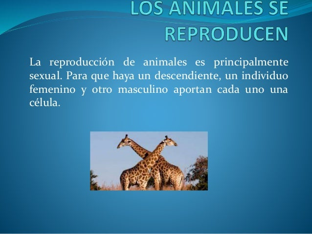 La reproducción de animales es principalmente sexual. Para que haya un descendiente, un individuo femenino y otro masculin...