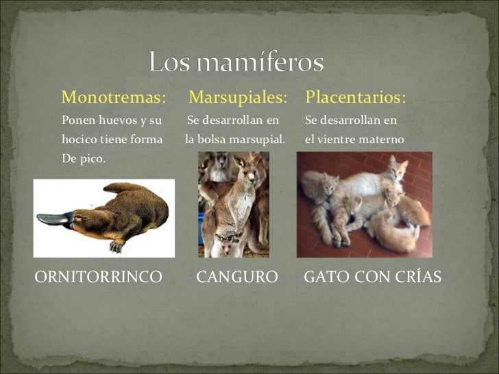 Los animales vertebrados.becerril Slide 2