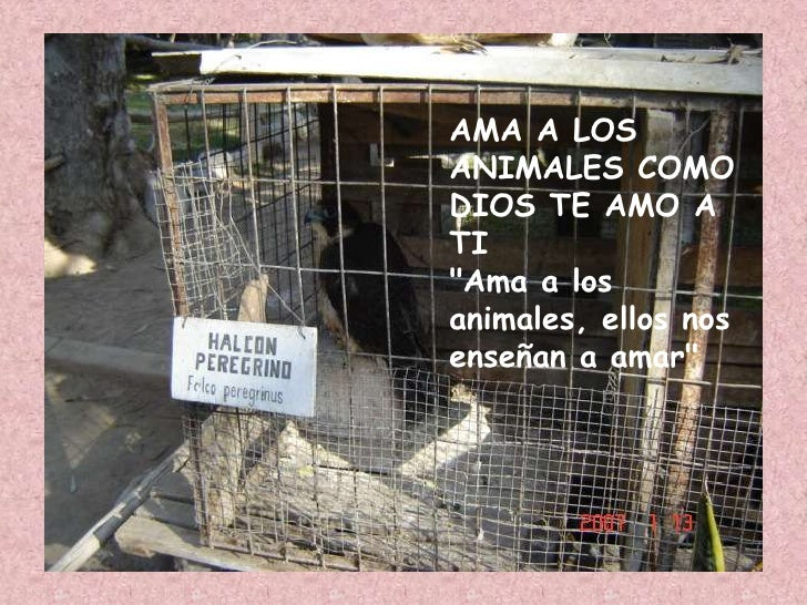 AMA A LOS ANIMALES COMO DIOS TE AMO A TI&quot;Ama a los animales, ellos nos enseñan a amar&quot;<br />