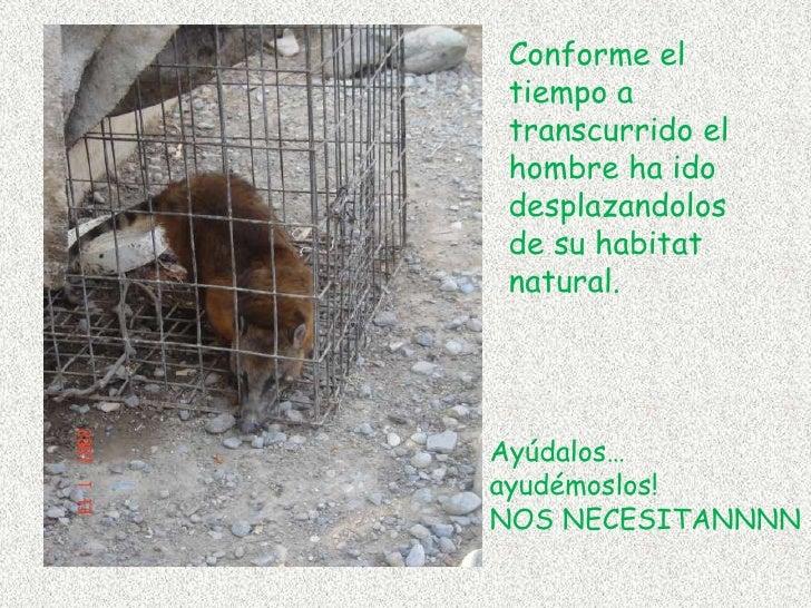 Conforme el tiempo a transcurrido el hombre ha ido desplazandolos  de su habitat natural.<br />Ayúdalos…<br />ayudémoslos!...