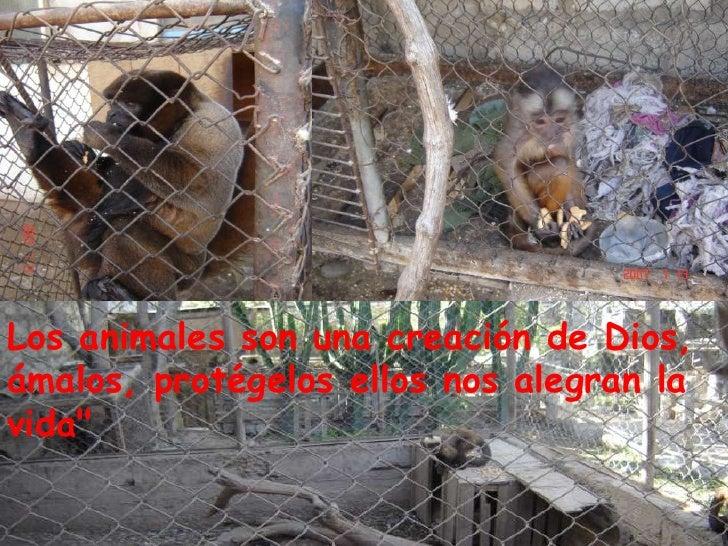 Los animales son una creación de Dios, ámalos, protégelos ellos nos alegran la vida&quot;<br />