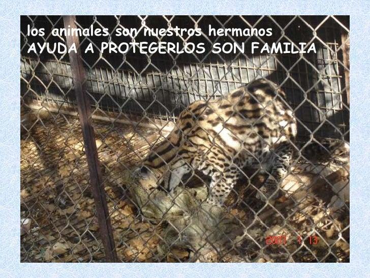 los animales son nuestros hermanos AYUDA A PROTEGERLOS SON FAMILIA<br />