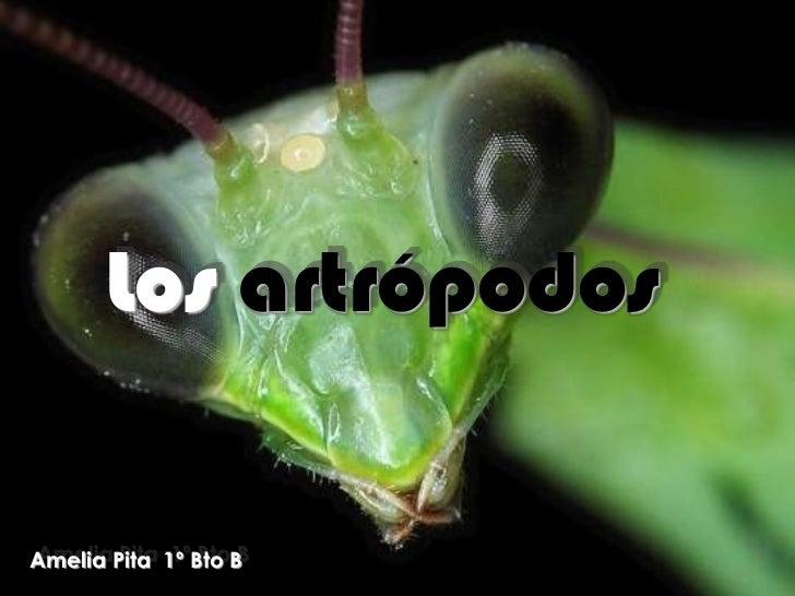 Los artrópodos<br />Amelia Pita  1º Bto B<br />