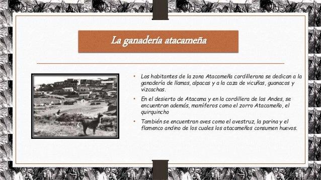 Llamas Alpacas Y Guanacos De Los Andes Search Results