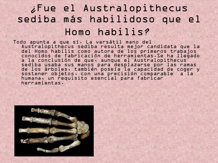 ¿Fue el Australopithecus sediba más habilidoso que el Homo habilis?   <ul><li>Todo apunta a que sí. La versátil mano del A...