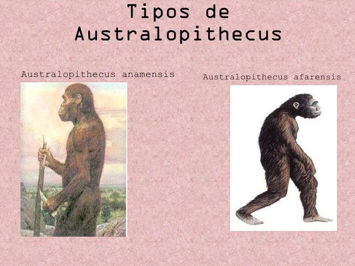 Tipos de Australopithecus <ul><li>Australopithecus anamensis   </li></ul>Australopithecus afarensis