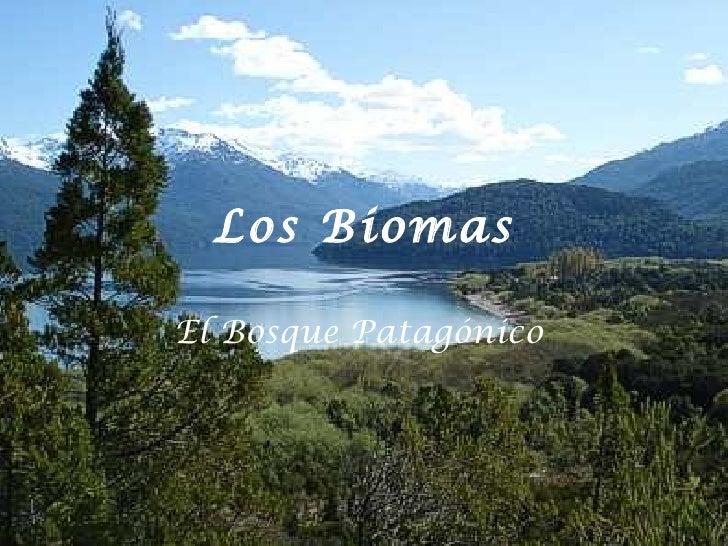 Los Biomas El Bosque Patagónico