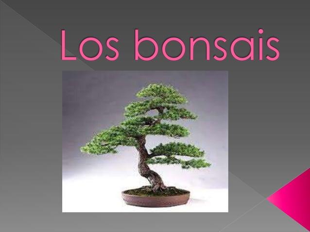  Bonsay es una palabra de origen japonés que significa literalmente bon- bandeja y sai - naturaleza(aunque etimológicamen...
