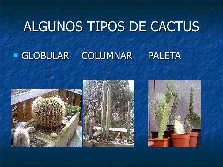 Los cactus for Clases de cactus