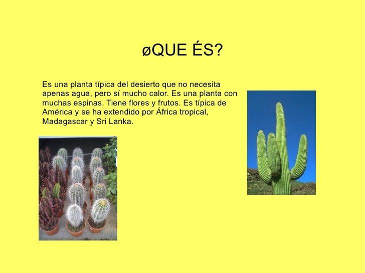 Los cactus - Informacion sobre los cactus ...