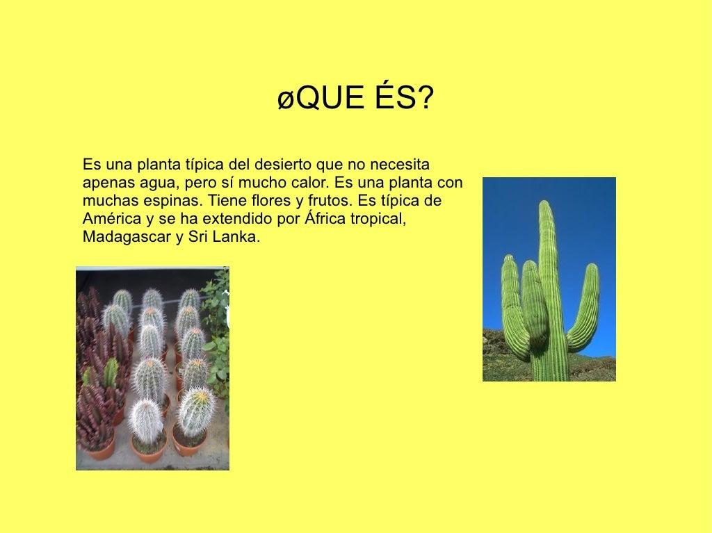 Los cactus for Informacion sobre el cactus