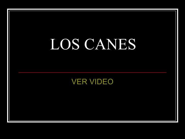 LOS CANES VER VIDEO