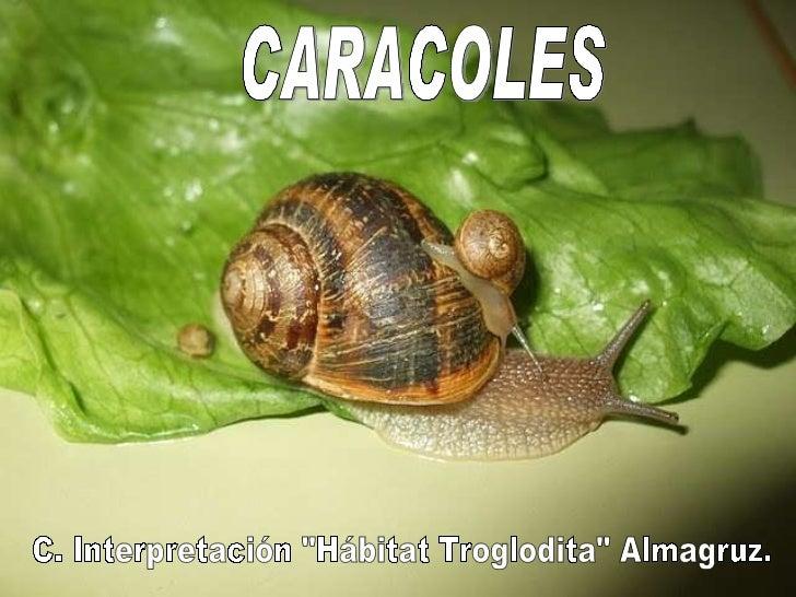 "CARACOLES C. Interpretación ""Hábitat Troglodita"" Almagruz."