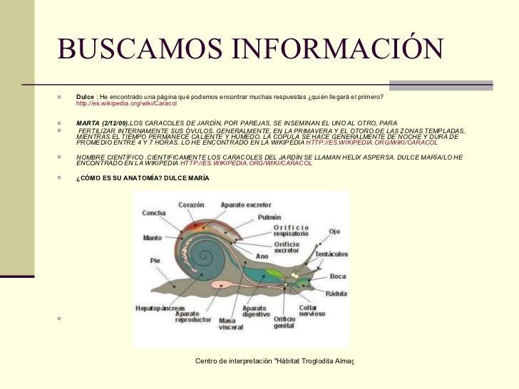 Los caracoles for Informacion sobre los arquitectos