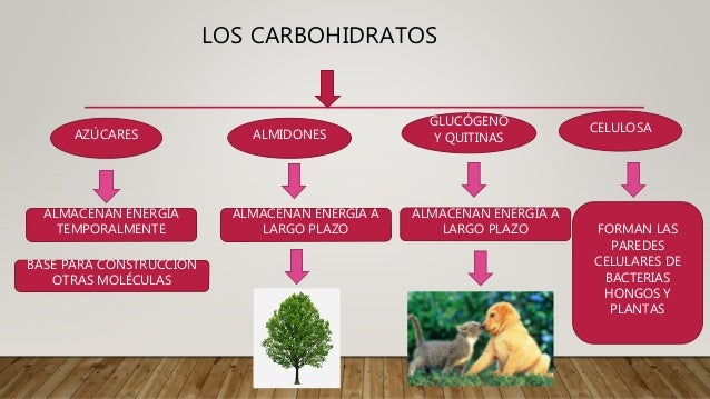 Mite Nury: Los carbohidratos Slide 2