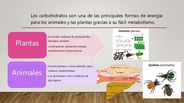 carbohidratos en las plantas
